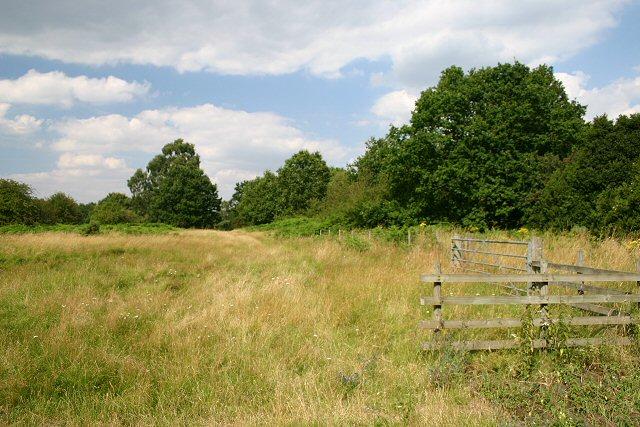 Thorpe Great Heath