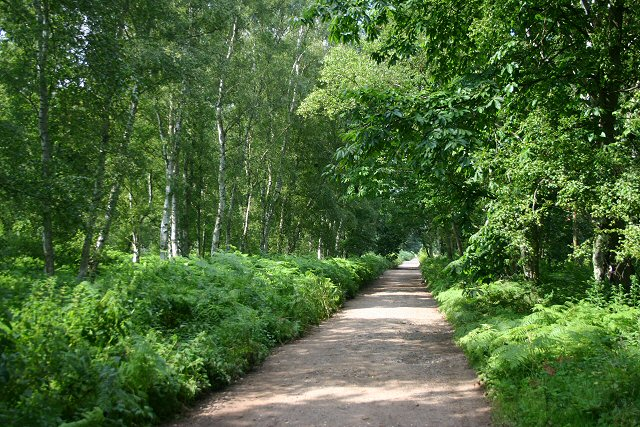 Peddars Way at Hockham Heath