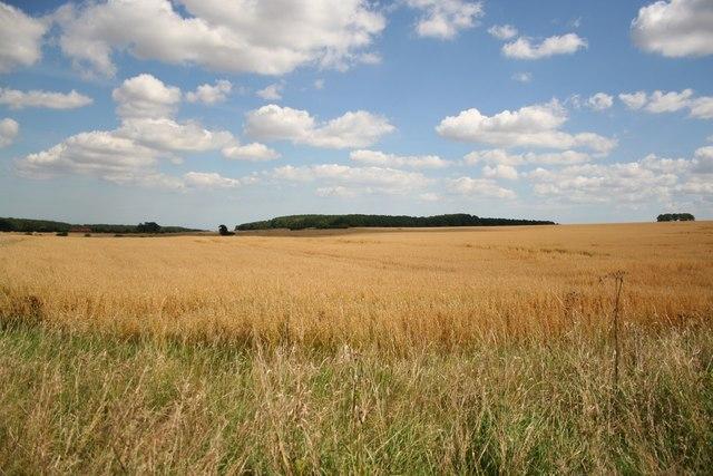 Tathwell farmland