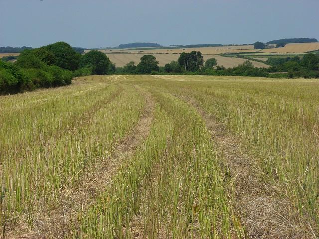 Farmland near Winterbourne Earls