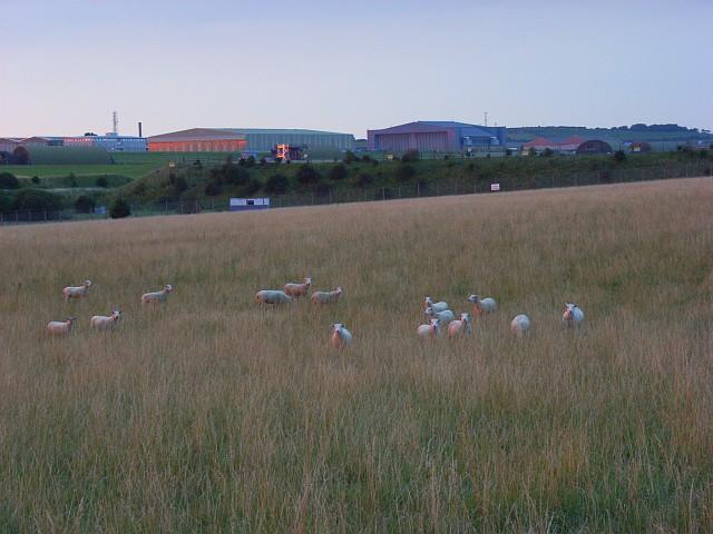 Pasture beside RAF Boscombe Down