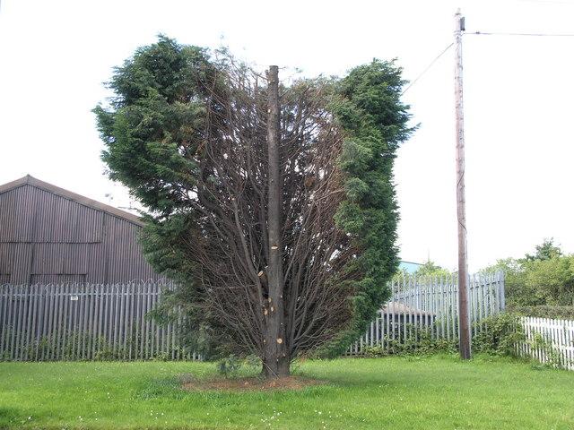 Tree. Springwell Village