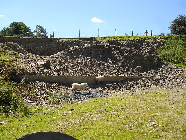 Sheep in a small quarry