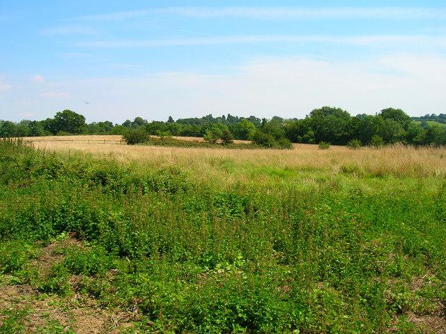 Fields, Burgh Hill