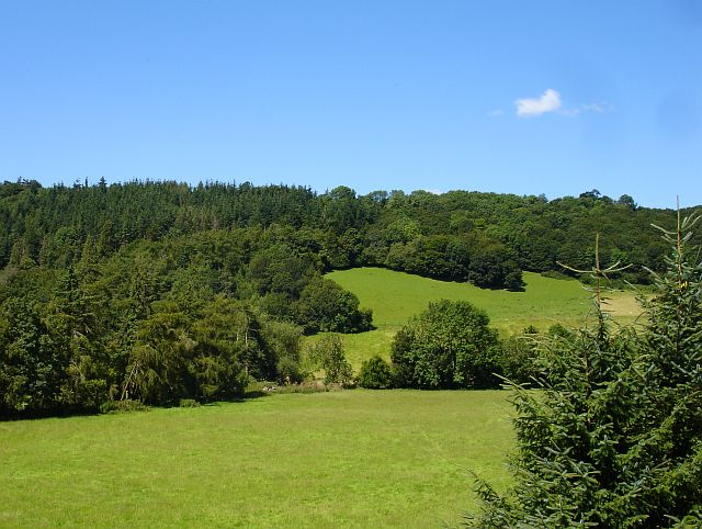 Dolforgan Wood