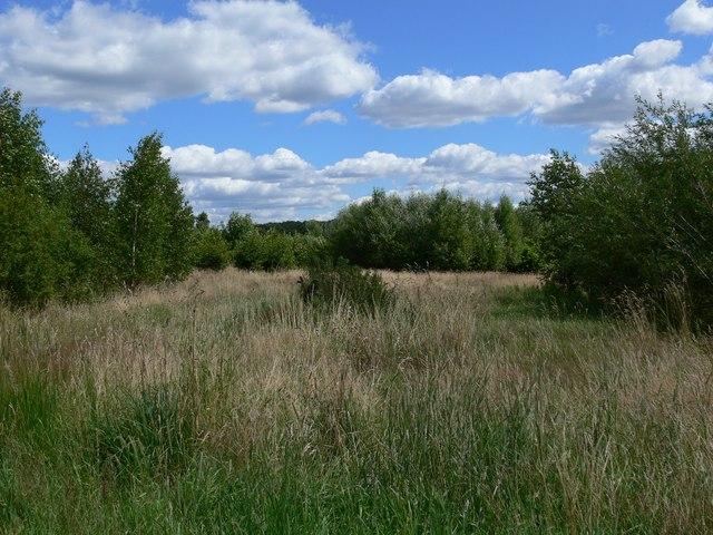 Woodland off Thornton Lane