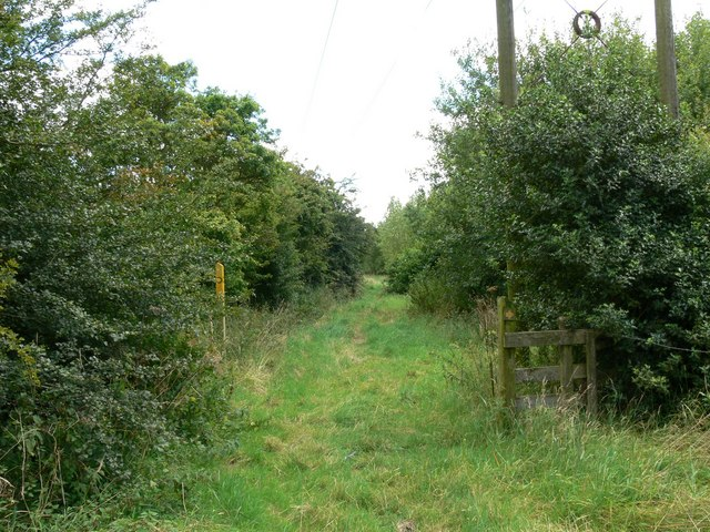 Ashley`s Wood, Leicestershire