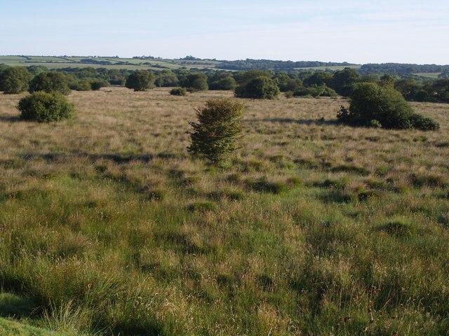 Hollow Moor