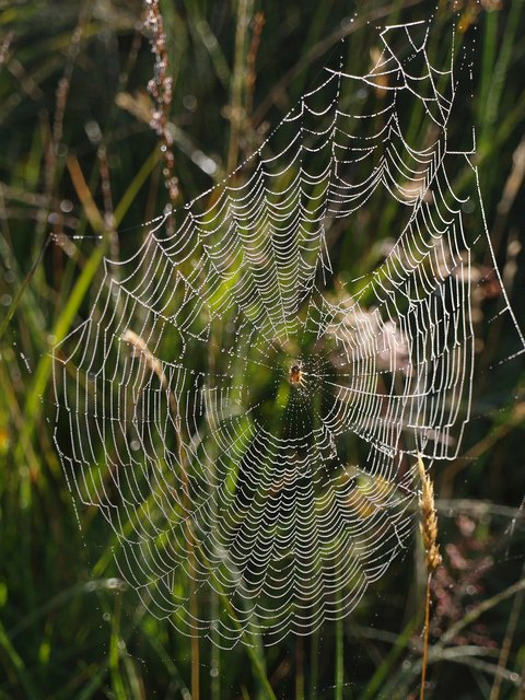 Spider's web on Hollow Moor