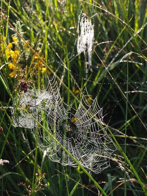 Spider's webs on Hollow Moor