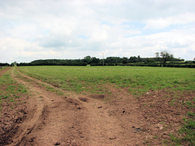 Field and Copse
