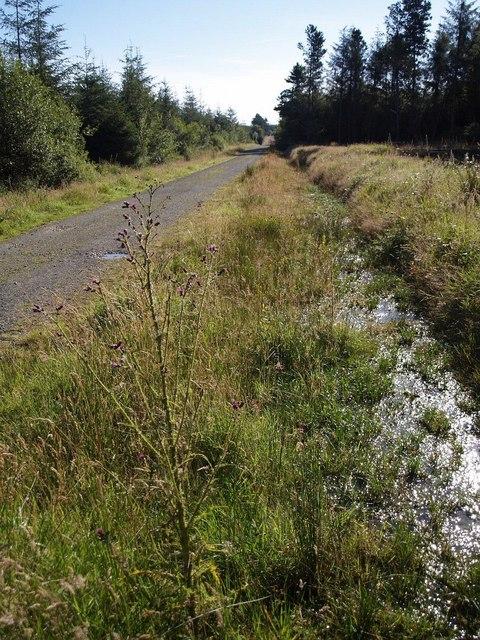 Ride through Halwill Moor Plantation