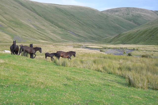 Wild Ponies in Langdale