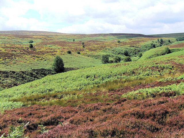Cross Gill, Barden Moor