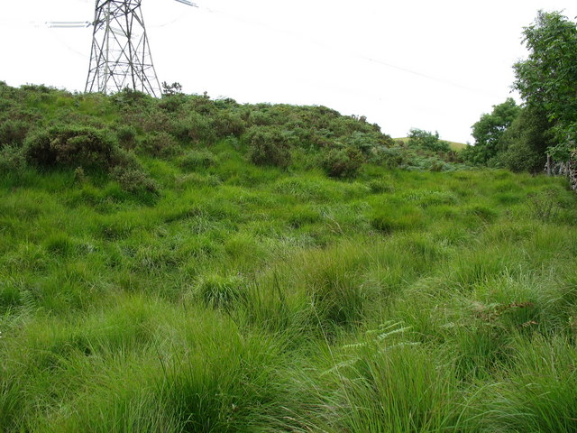 A water-logged area of hard to walk through tussocky grass by the forest wall