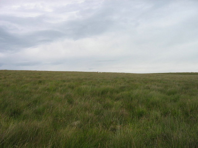 Moorland near Long Crag