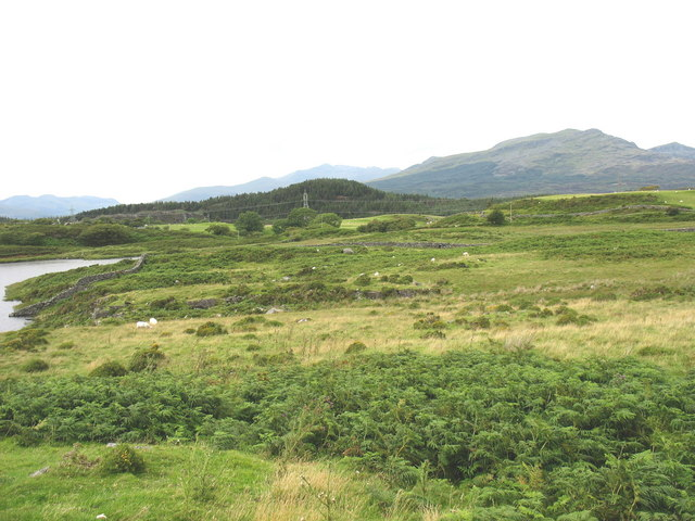 Parc Ty Newydd - an area of pretty rough grazing