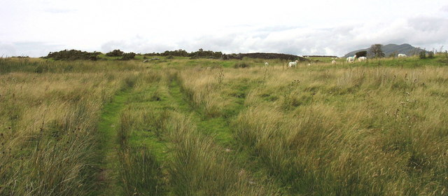 Sheep grazing on rough pasture