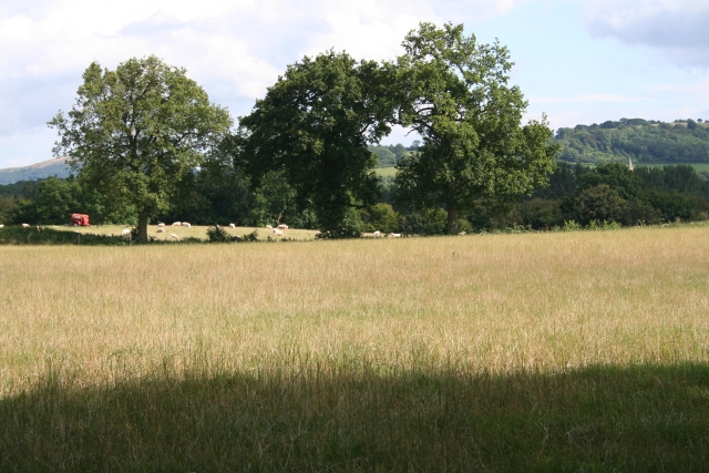 Pasture near Bosbury House