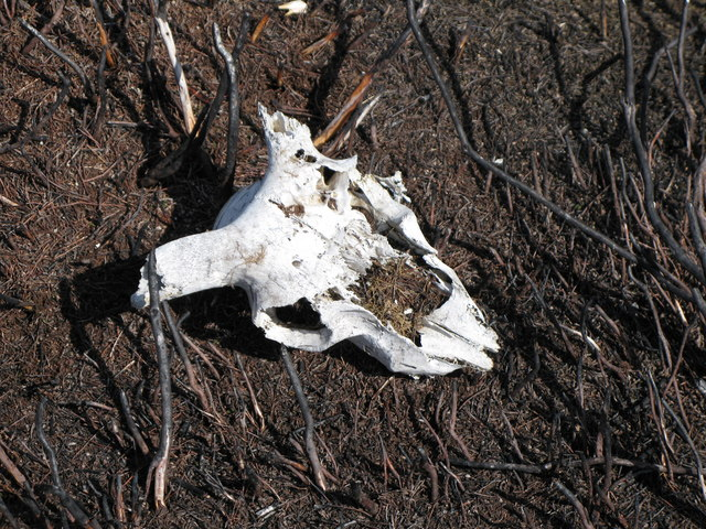 Death on the moor