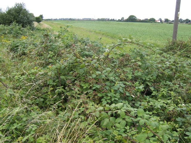 Bramble patch by a redundant byway