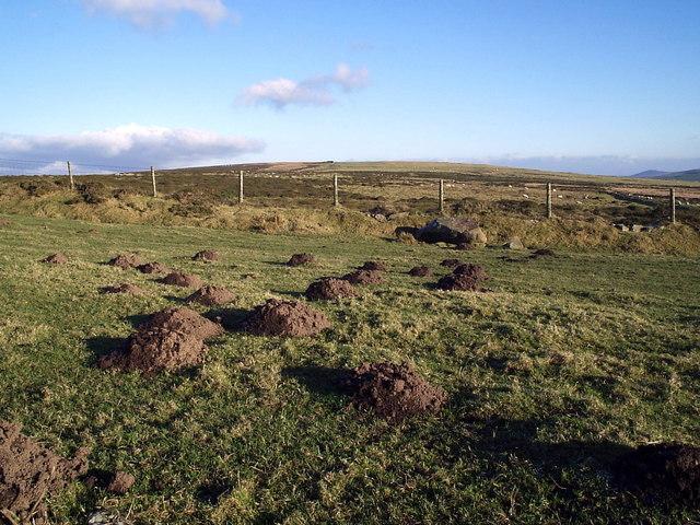 Molehills on Mynydd Melyn
