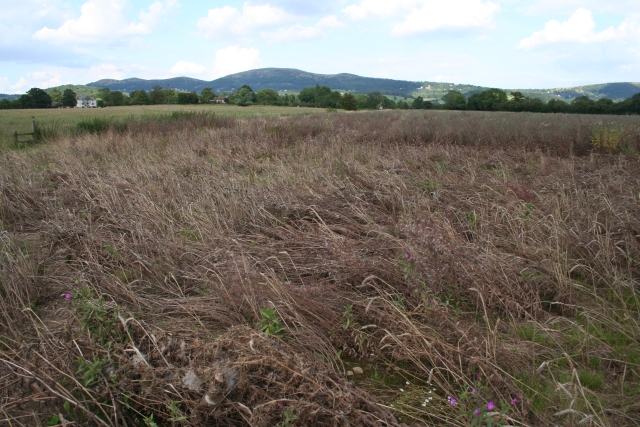 Crop Damage near the Cradley Brook