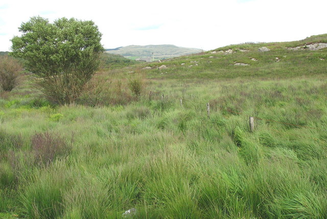 Tussocky wetland