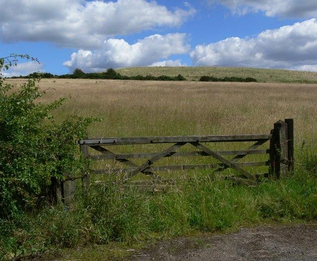 Field near Cliffe Hill Quarry