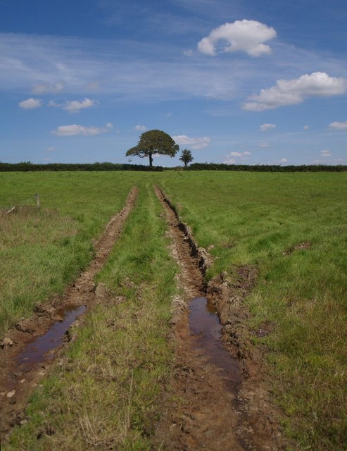 Ruts across field near Lashbrook