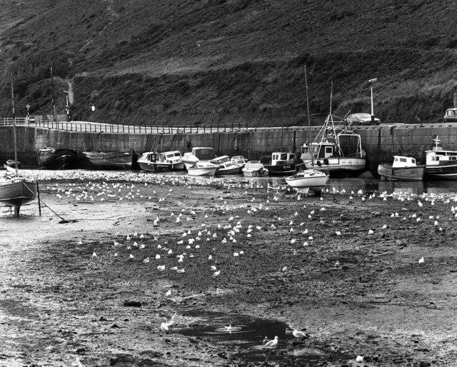 Seagulls, Peel Harbour, Isle of Man