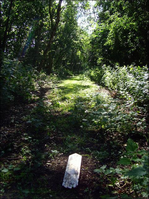Old railway path