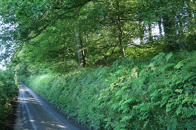 Marwood: lane south of Whitehall