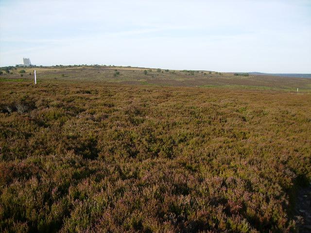 Heather moorland near Lilla Rigg