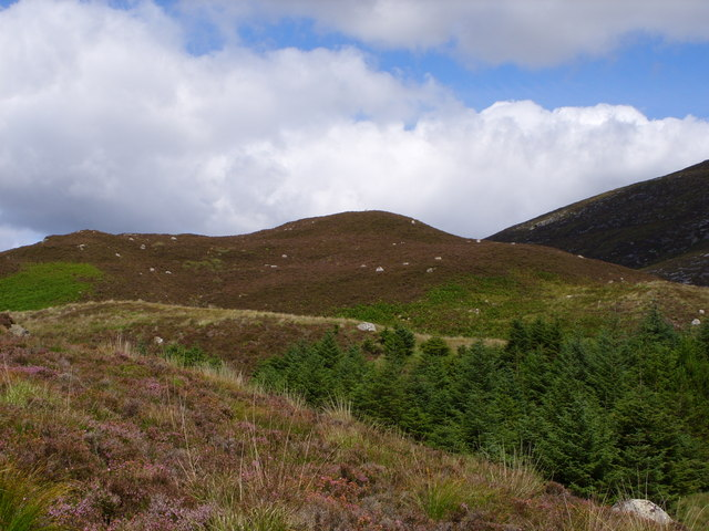 Blairbuies Hill  From the Forest Track