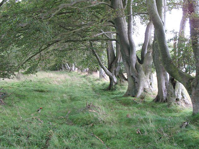 Mutual Wood