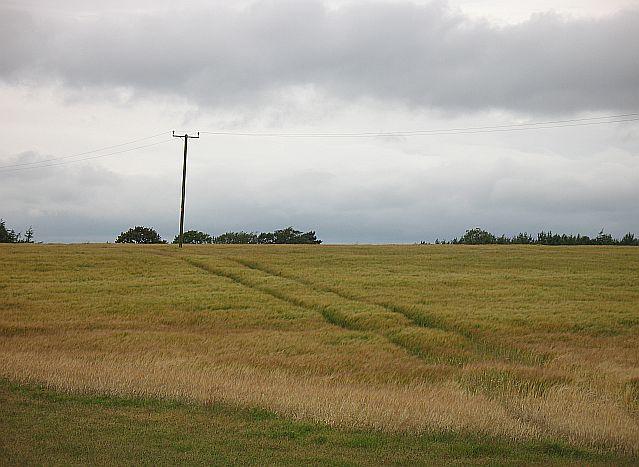 Barley, Tynehead
