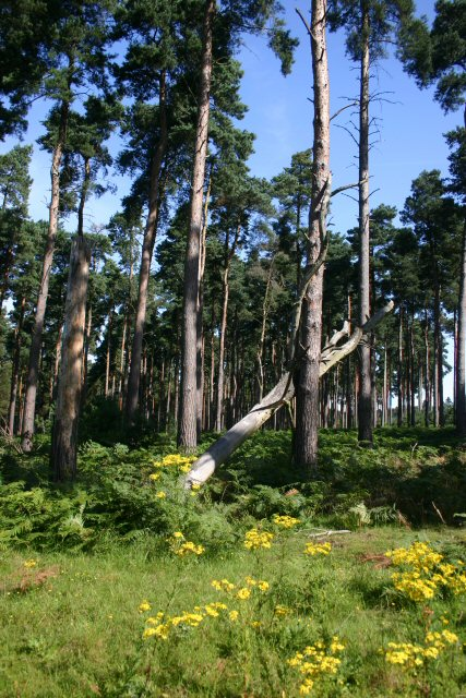 High Wrong Corner, Thetford Forest