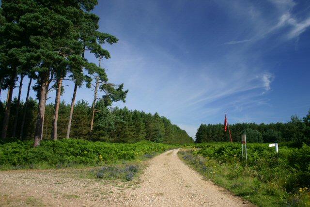 Redneck Heath, Thetford Forest