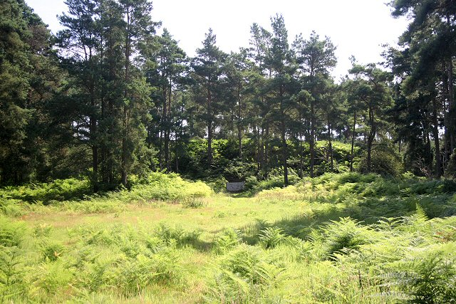 Rifle Range, Thetford Forest