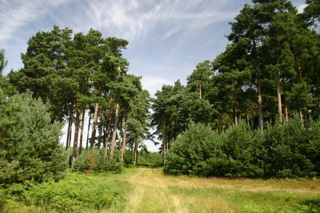 Wangford Woods