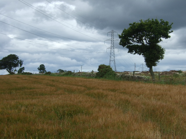 Power lines over barley