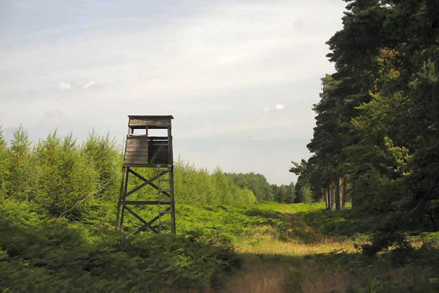 Firewatchers' tower, Wangford Woods