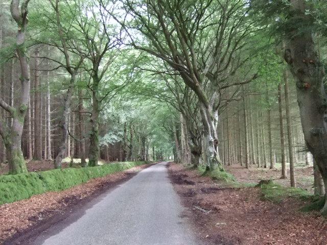 Road through Dunecht Estate woods
