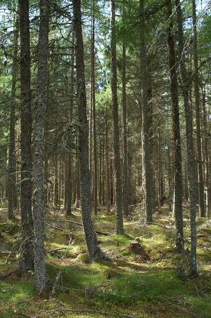 Daviot Wood