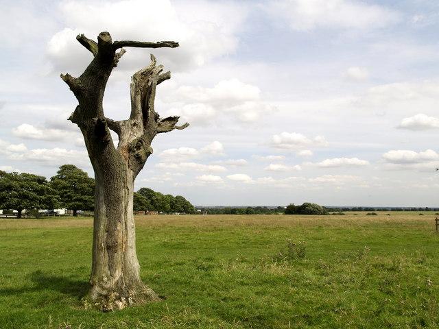 Beverley Westwood Lightning Tree