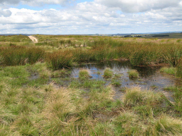 Damp moorland near Crawberry Hill