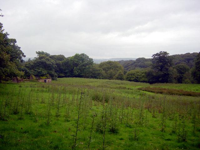 Site of original Dumkins Farm Summer 2007