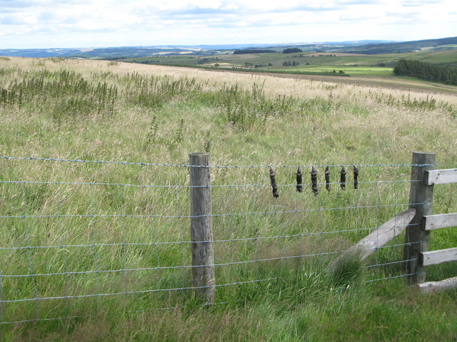 Rough pastures above the Linn Burn, and dead moles