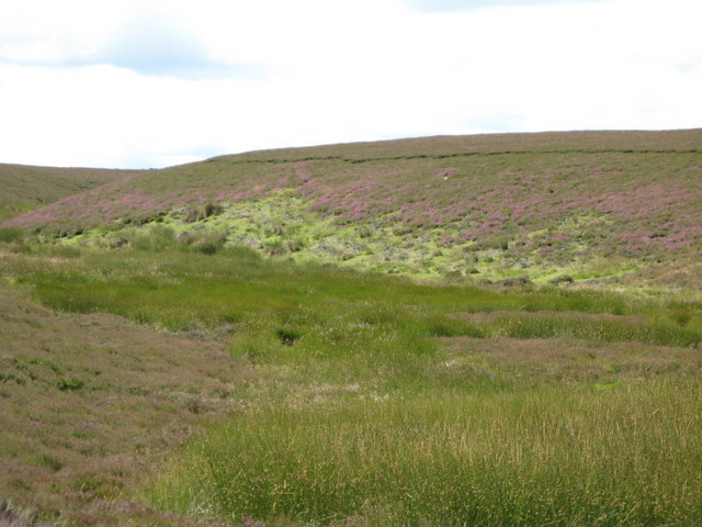 Heather in a cleugh